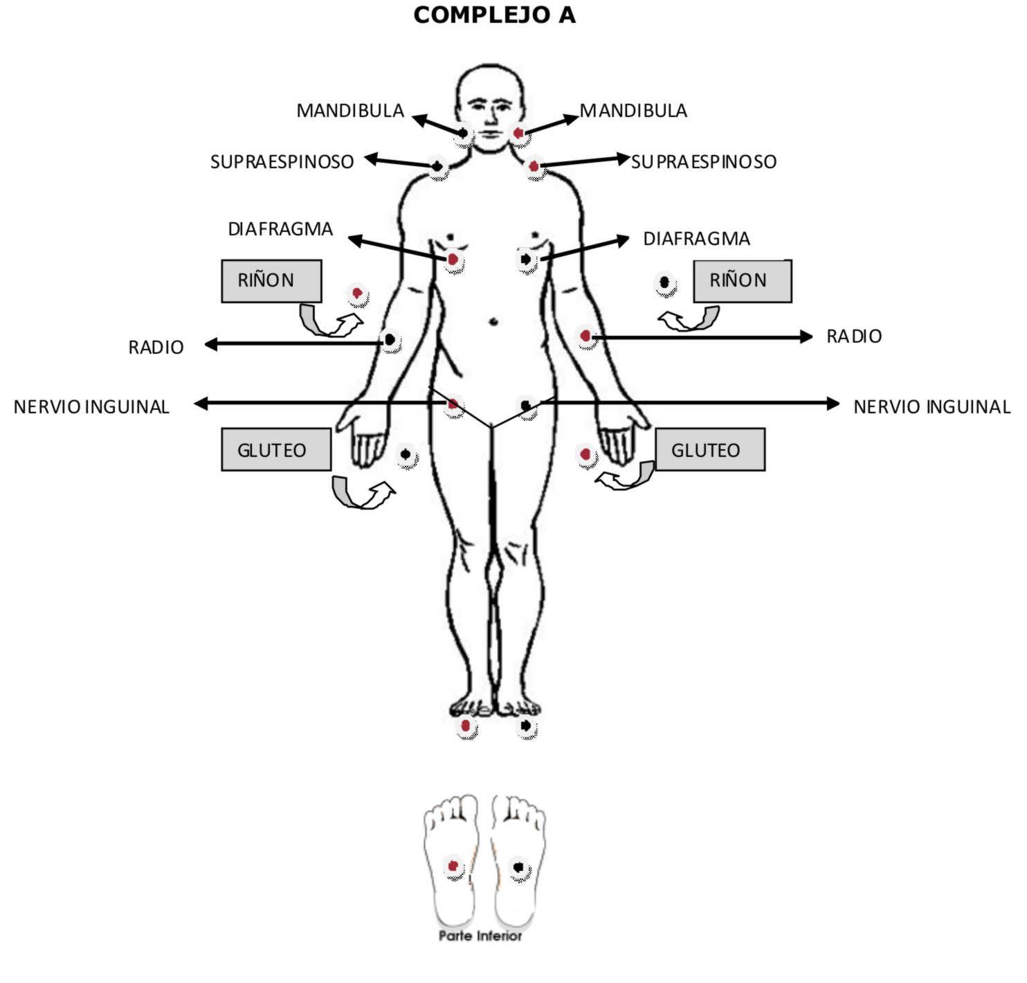 Puntos para bajar de peso con bio magnetismo medico